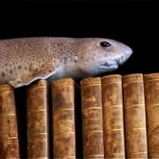 poisson-livre